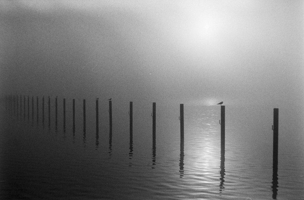 Stangen im Meer, die im Nebel verschwinden, schwarzweiß