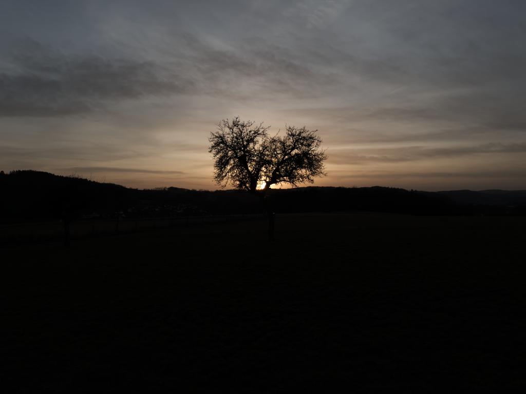 ein Baum im Dunkeln mit Sonnenuntergang im Hintergrund