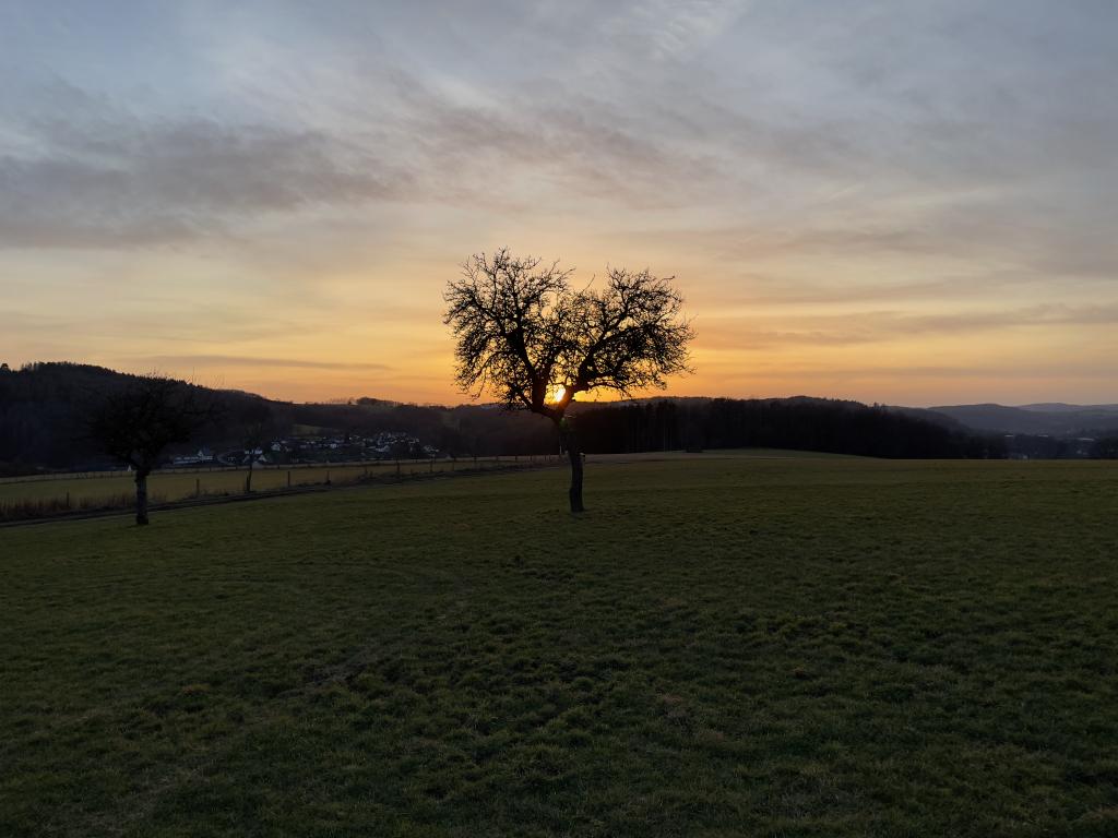 ein Baum auf einer Wiese, im Sonnenuntergang
