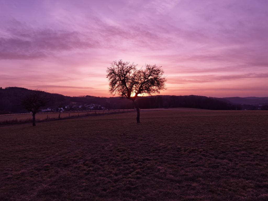 ein Baum auf einer Wiese in der Dämmerung mit violettem Hintergrund