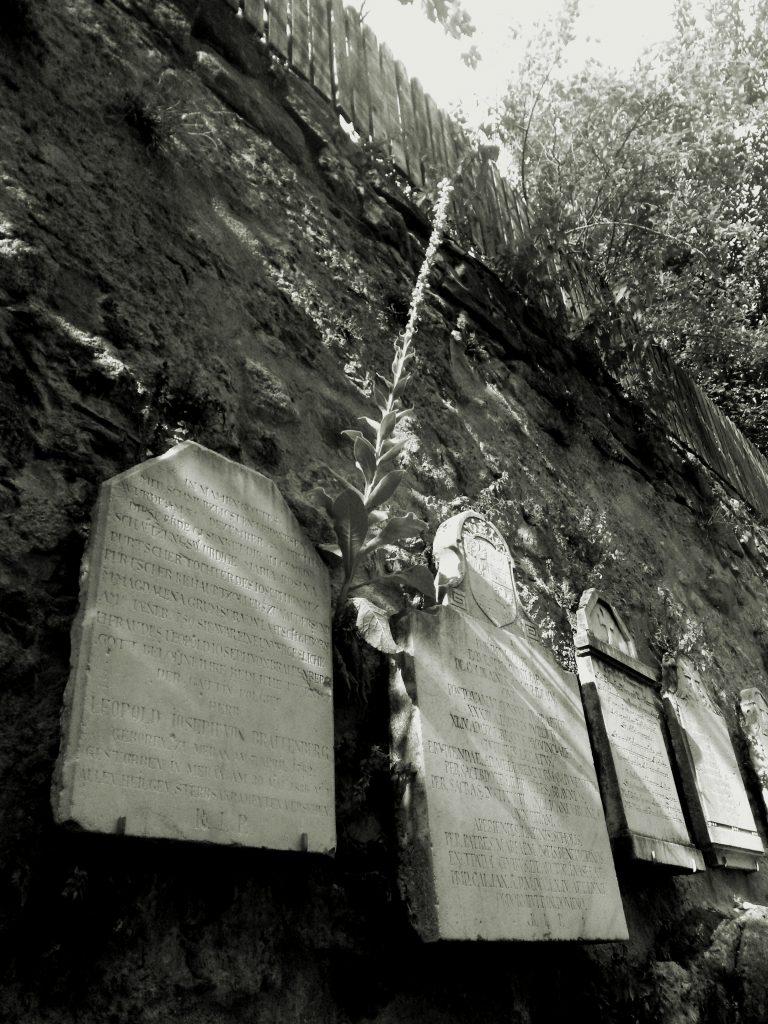 ein schwarz-weißes Bild von Königskerzen und Grabtafel
