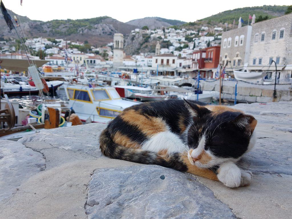 eine dreifarbige Katze schläft auf einem Stein vor der Kulisse des Dorfes Hydra in Griechenland